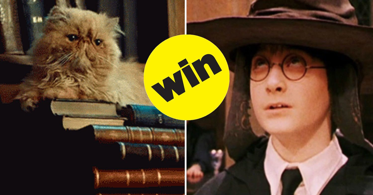Let The Sorting Hat Sort Your Cat Or Dog Or Rabbit Or Lizard Hogwarts Your Pet Pets