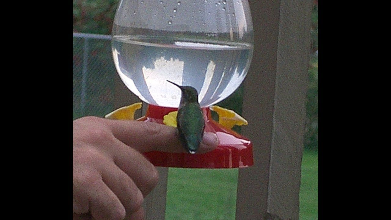 ef9f039419714fd0373664e3cdbe5498 - How To Get A Hummingbird To Land On Your Finger