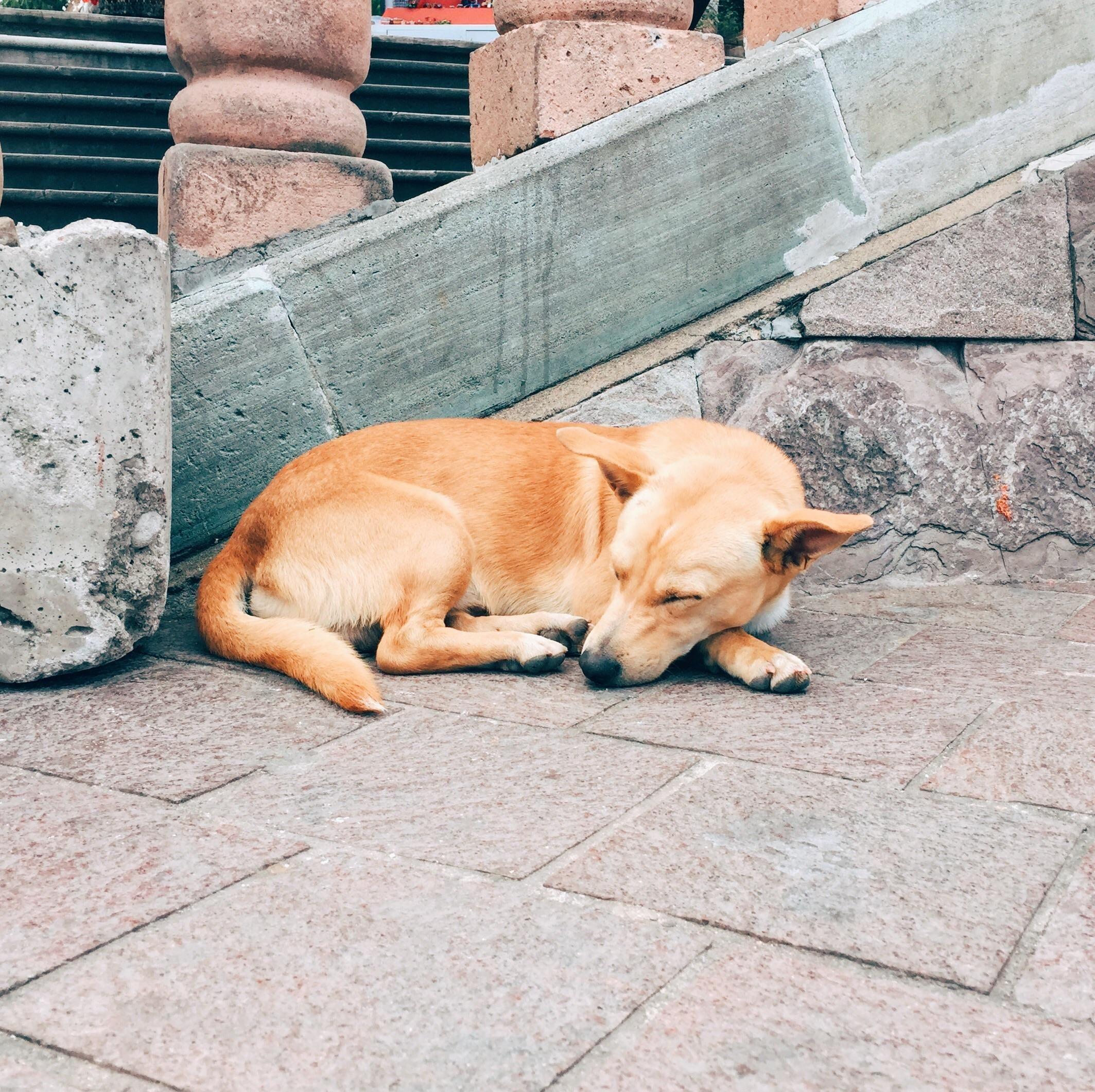 Mexican Streetdog I Met In Guanajuato Ive Seen A Lot Of Street