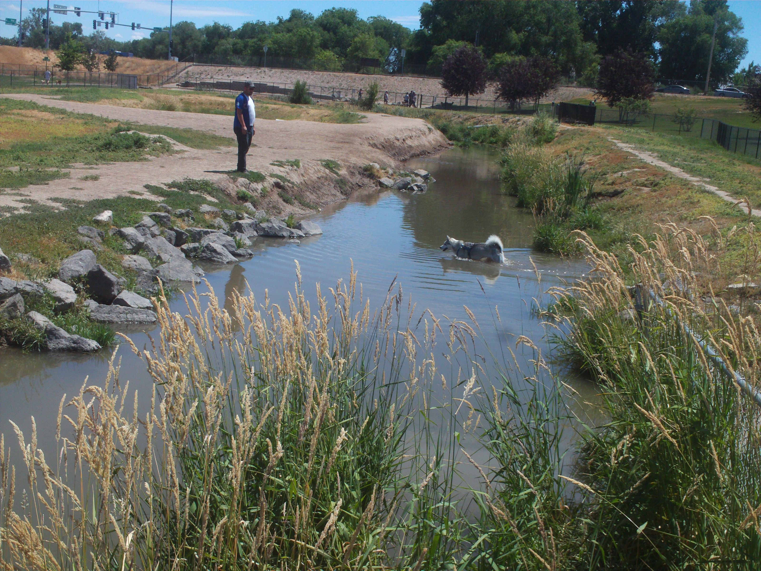 PT JUNE 2014 WATER THING AT THE NAMPA IDAHO DOG PARK. WITH A DOG IN THE WATER.
