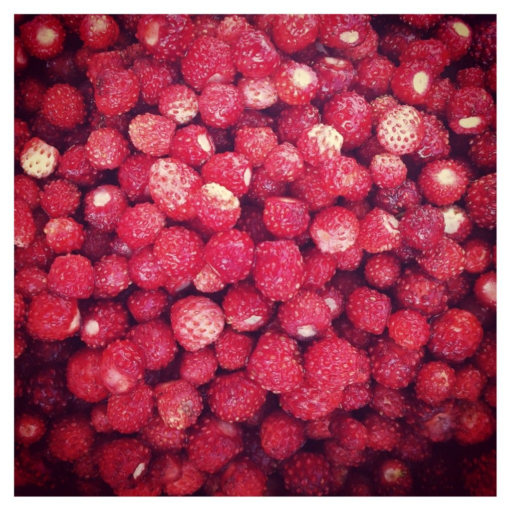 Mansikassa  |  Wild strawberries