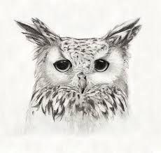 Afbeeldingsresultaat voor owl drawing