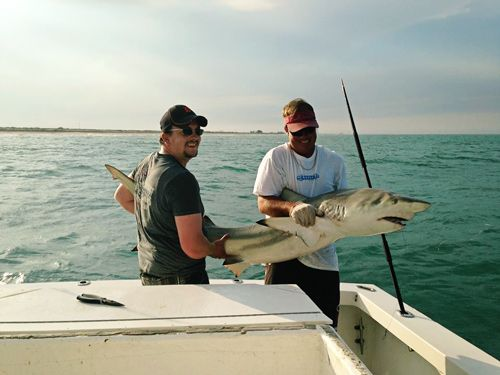Amelia Island Shark Fishing Source Orlando Florida Coastal And Pelagic Sharks