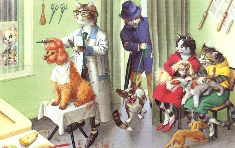 парикмахерская открытки с котом очень