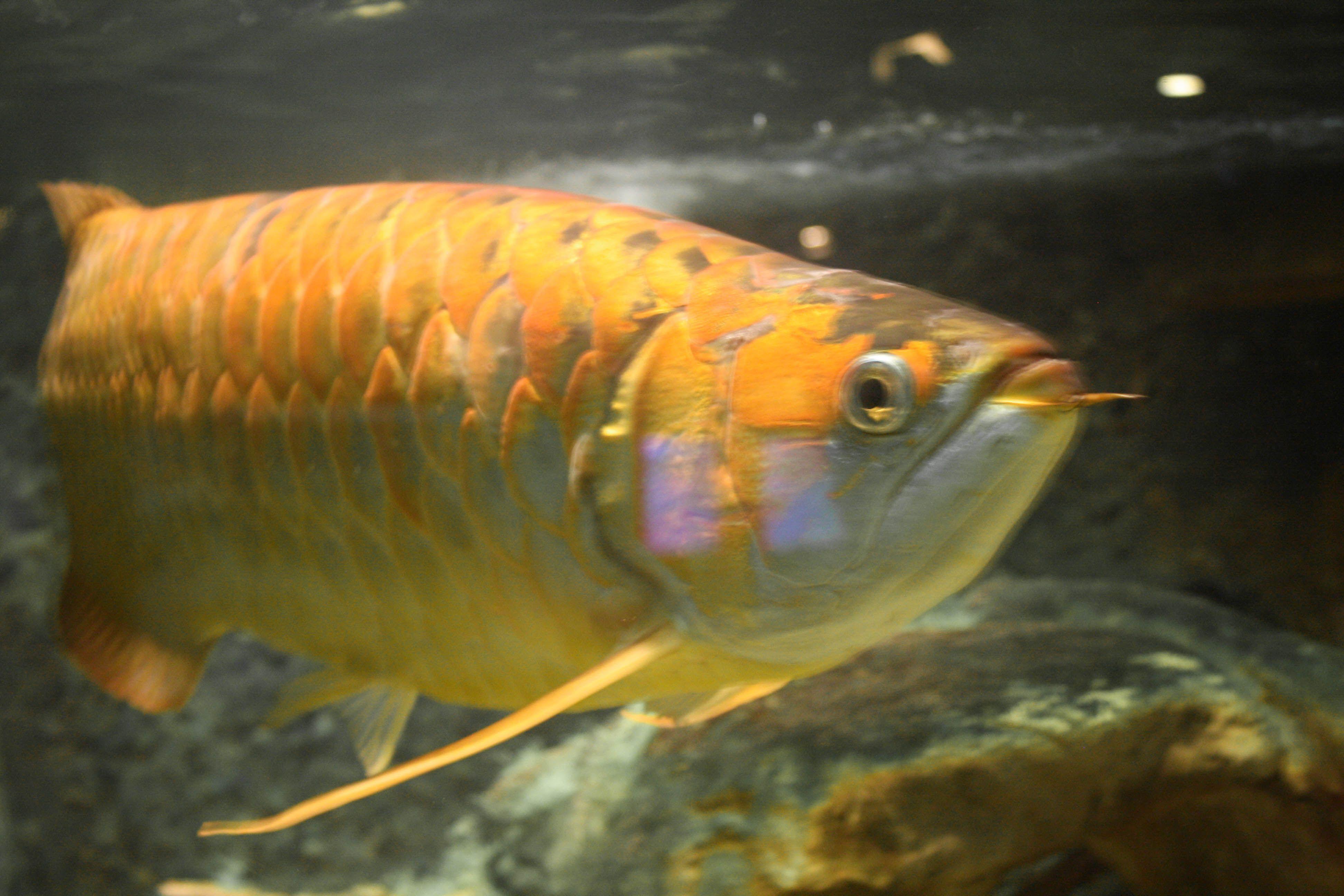 Fish aquarium in niagara falls - Aquarium Of Niagara Niagara Falls New York Www Stephentravels Com Top5