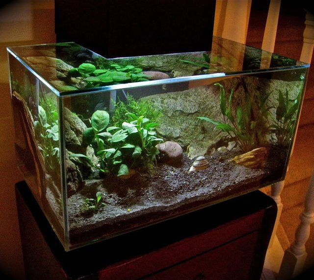 Fluval edge aquarium set by hagen fish pinterest for Aquarium edge