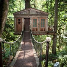 Tree House hotel in Washington!