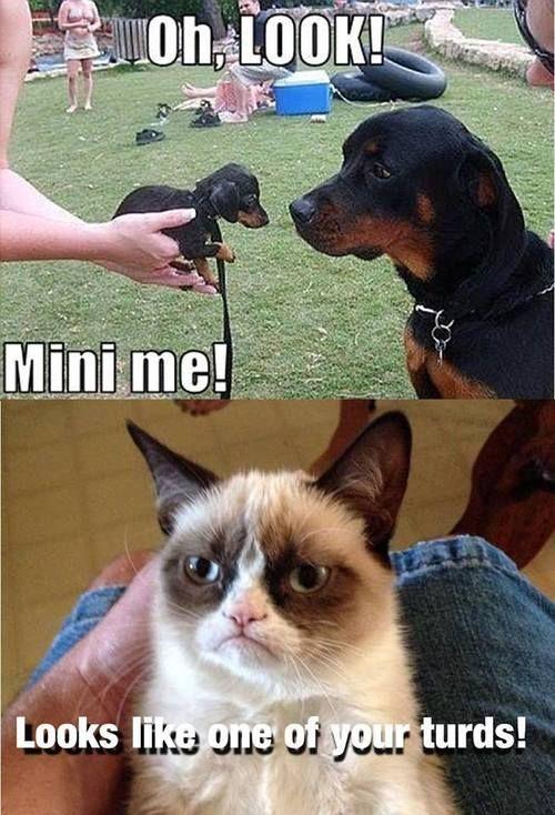 Grumpy Cat On Tumblr Grumpy Cat Funny Cat Memes Grumpy Cat Humor