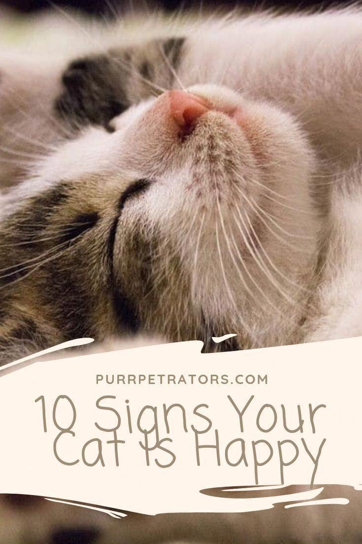 Simple Cat Care Strategies In 2020 Cats Cat Care Cat Cuddle