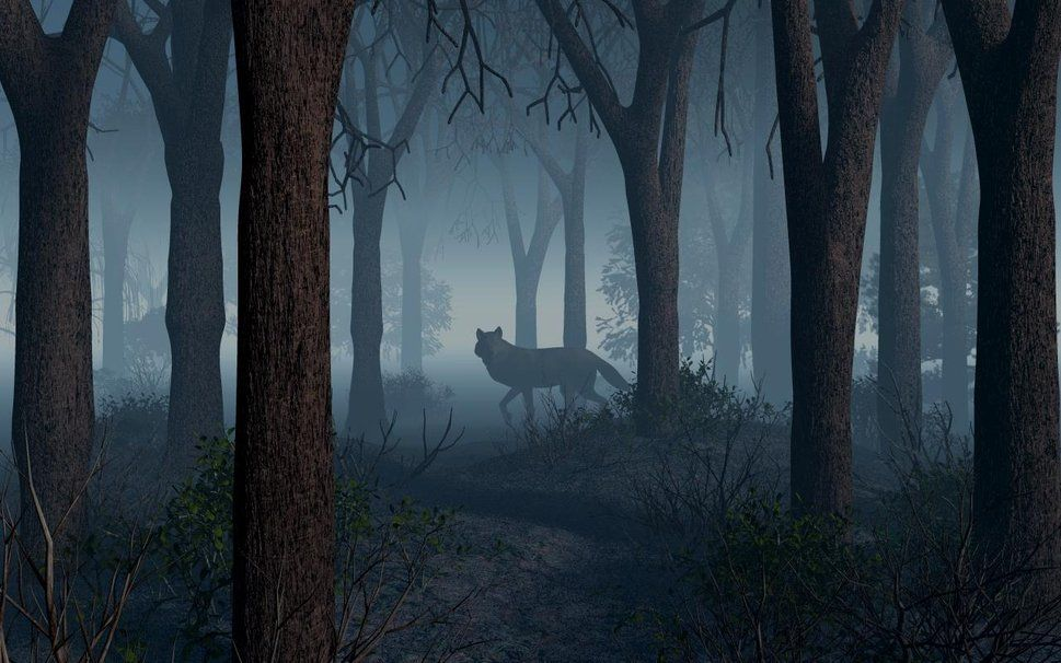 Wolf In The Woods Wallpaper Werwolf Schattenbilder Wolf