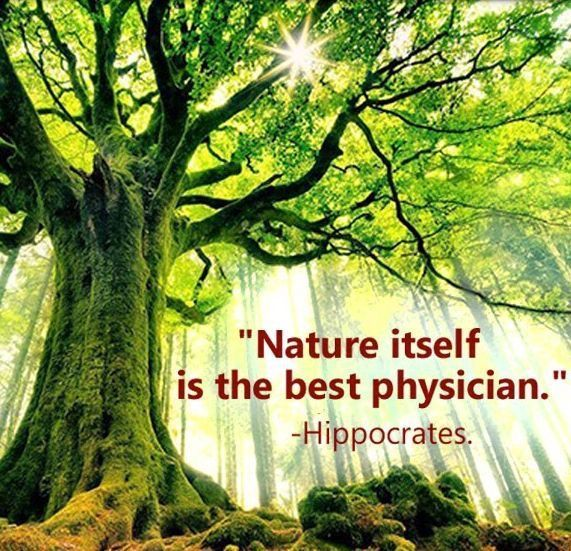 Interview With An Inspiring Naturopath Mother Nature Quotes Nature Quotes Hippocrates Quotes