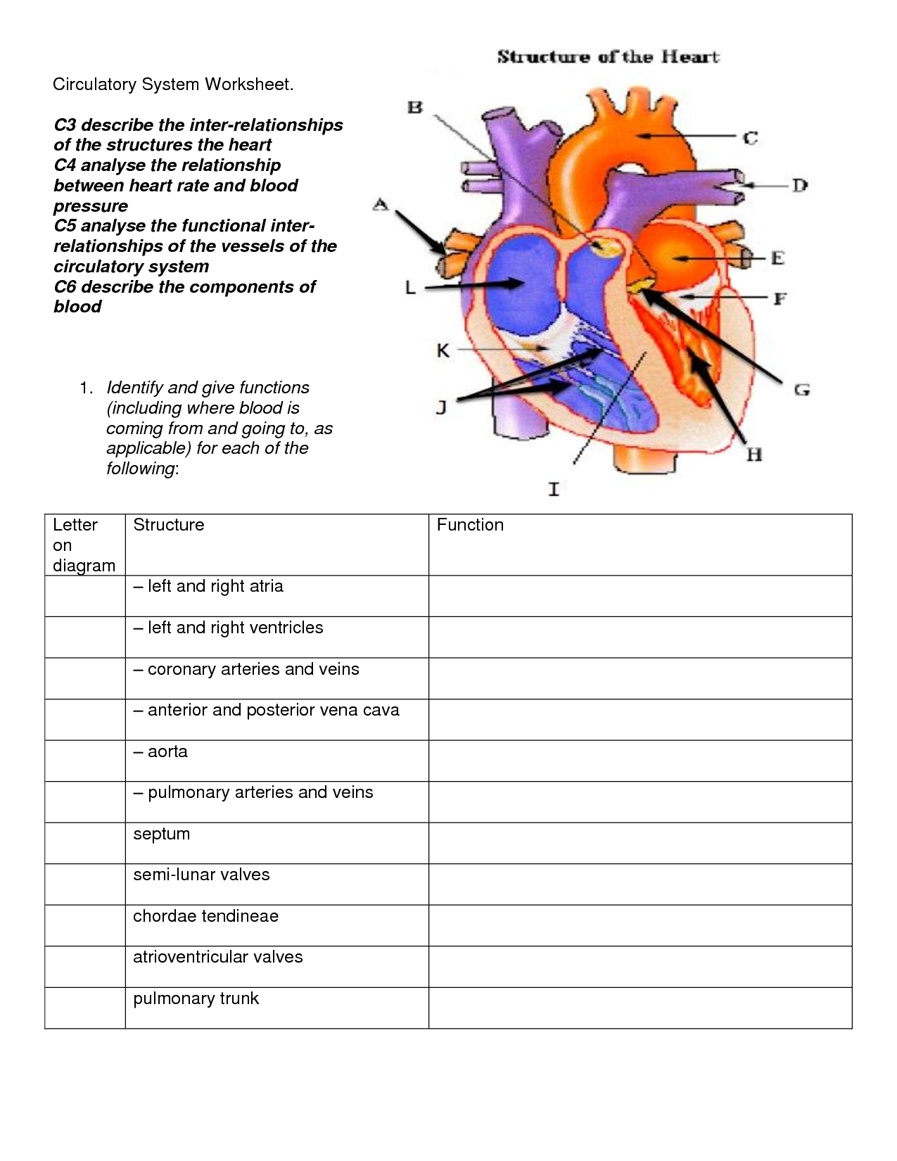 free parts of the heart worksheets | Describe the function of the ...