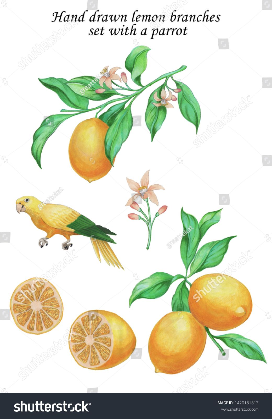 hand painted set with lemons on branches with flowers and yellow green parrot citrus fruit botanical drawing summe paint set botanical drawings hand painted pinterest
