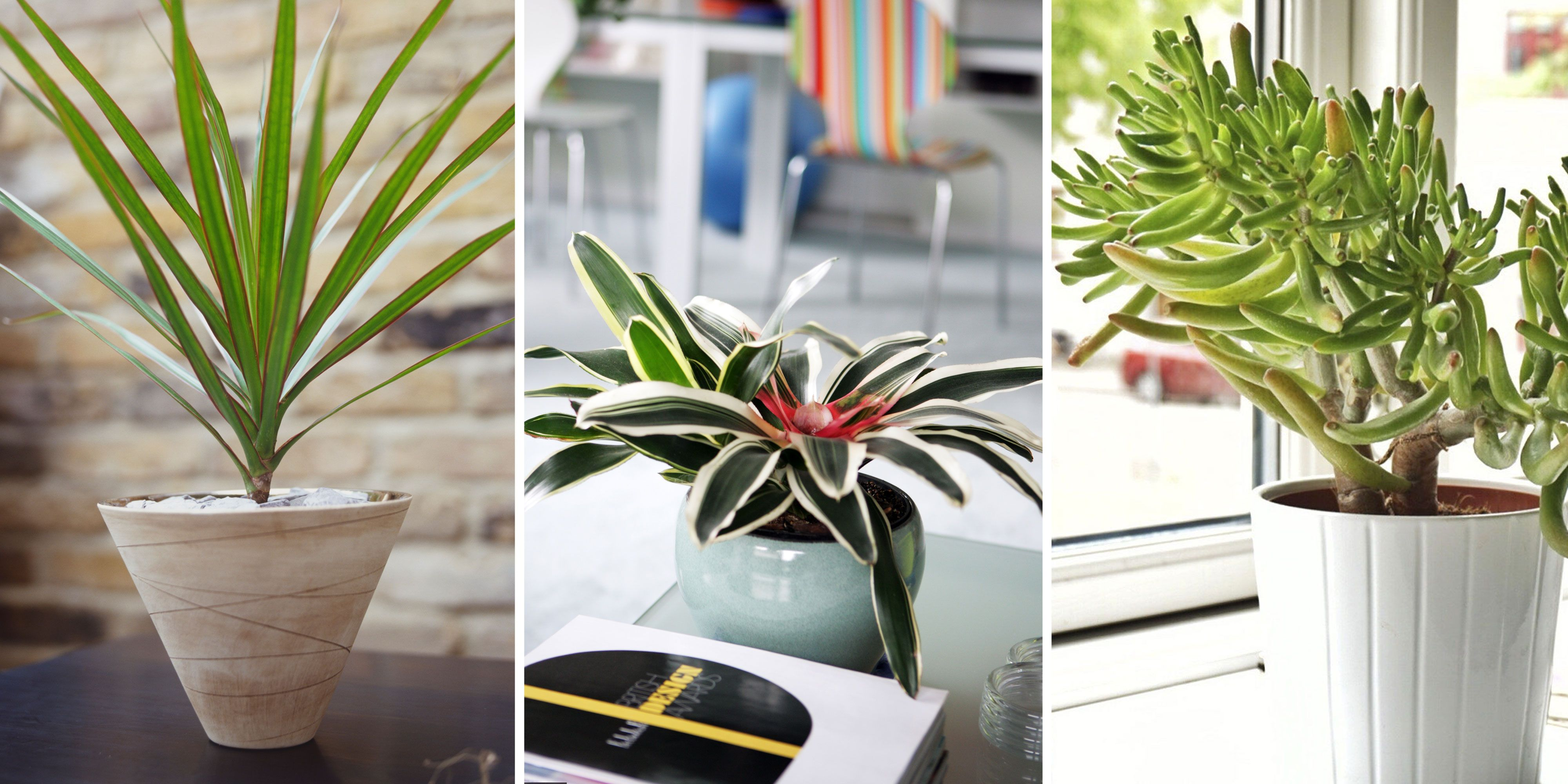 5 Plants That Can Help Improve Air Quality in Your Home