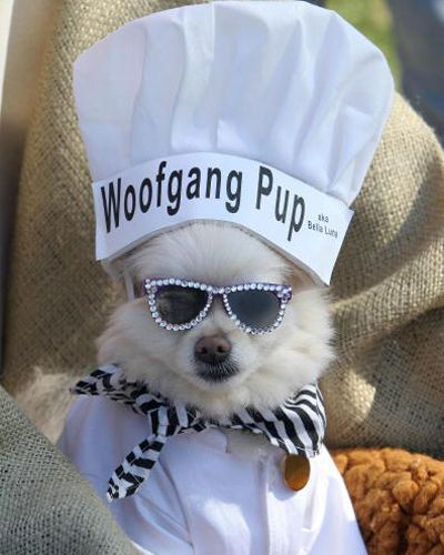 Wolfgang Pup Halloween Costume For Bailey Her Daddy Would Love