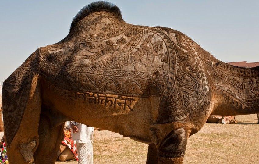 Впечатлило (с изображениями) | Верблюды, Фотографии, Животные
