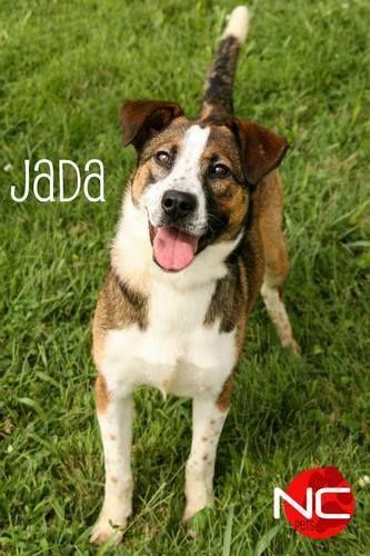 Urgent Shelbyville Ky Shelby County Animal Shelter 502 321 5488 Shelbycountynkmissionfoster Gmail Com Jada Aussie Mi Dog Sounds Animals Animal Shelter