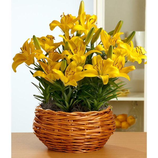 sch ne zimmerpflanzen bl hend gelb zimmerpflanzen pinterest sch ne zimmerpflanzen. Black Bedroom Furniture Sets. Home Design Ideas