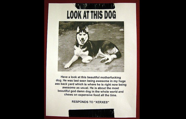 Badass Dog Flyer Funny Pinterest Dog - lost dog flyer template