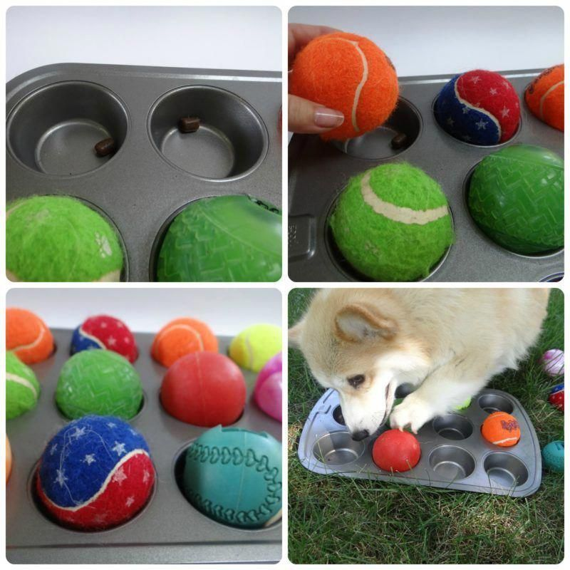 Our Tennis Ball Pet Hacks Dog Games Diy Dog Toys Brain Games