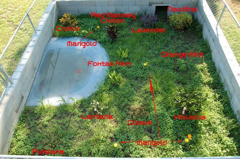 Tortoise habitat ideas pen latest update tortoise for Forum habitat plus