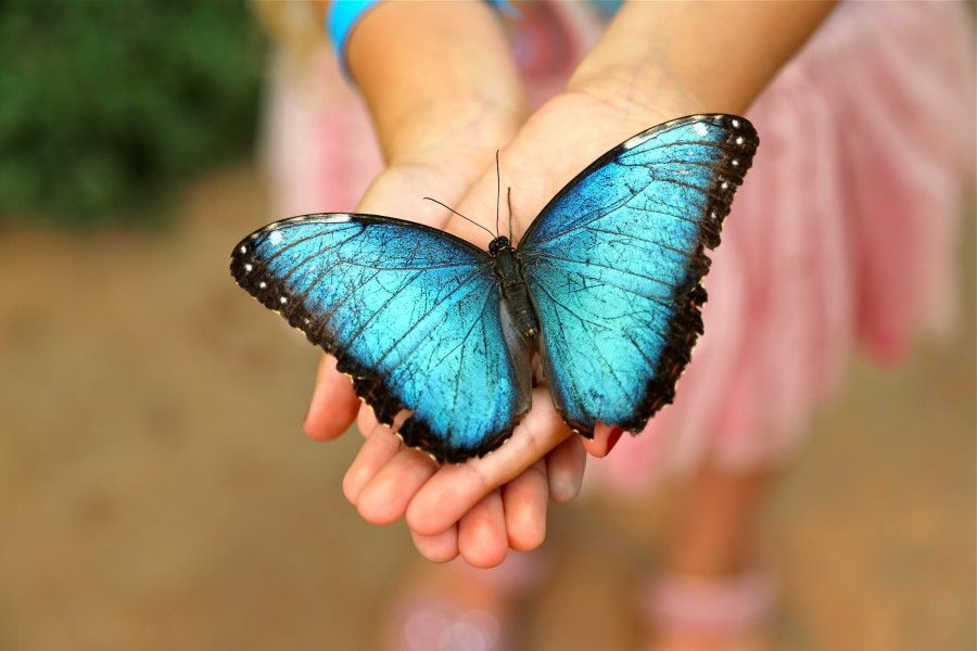 Family Guide to the Brand New Butterfly Pavilion in Philly