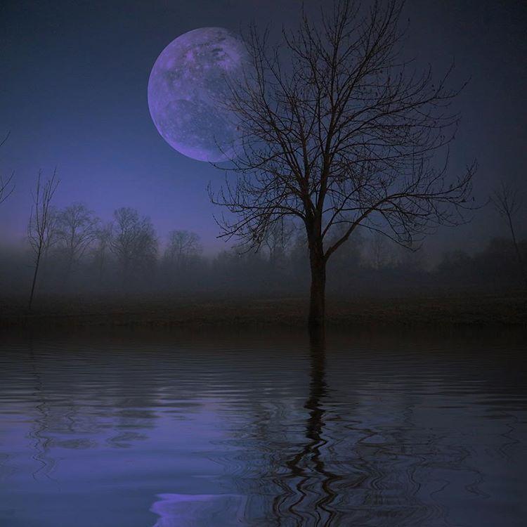 The Purple Quiet Moon Trees Quiet Night Purple Violet Fullmoon Forest River Landscape Photography Dark Darkness Darkvibes