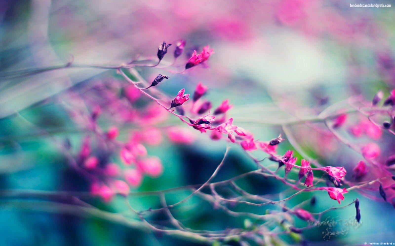 Fondos De Pantalla De Flores Hermosas Para Fondo Celular: Imagen En Hd 3 HD Wallpapers