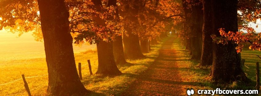 Autumn Sunrise Walkway Facebook Cover