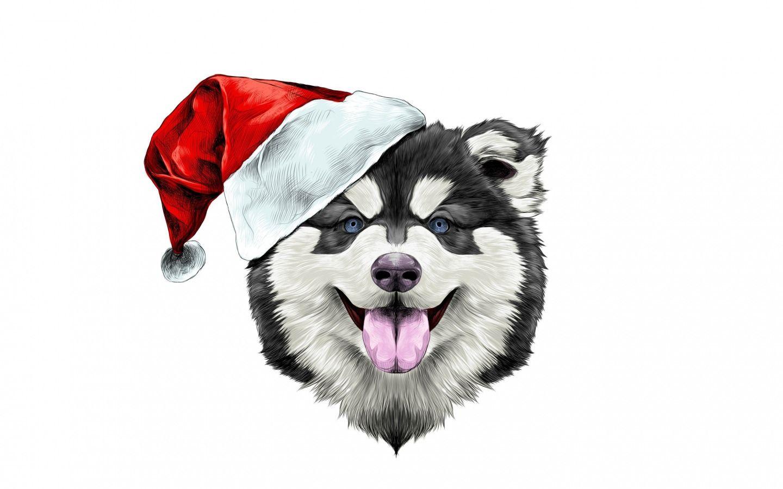 Скачать обои собака, шляпа, праздник, happy, santa claus ...