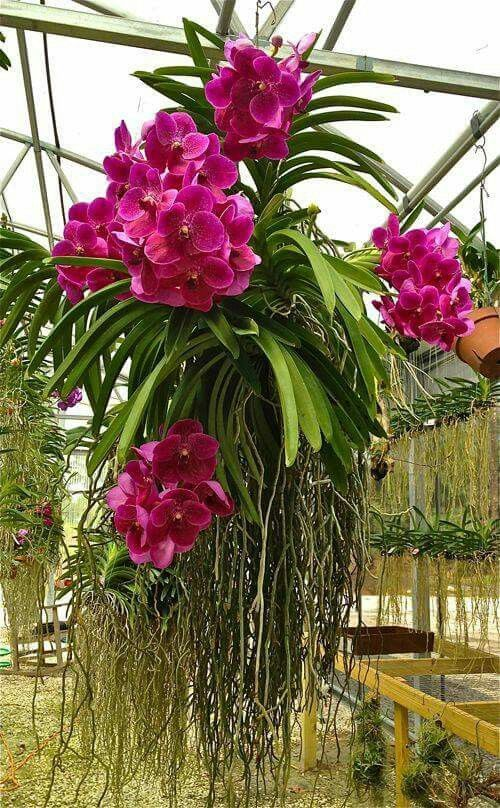 beautiful hanging plants nanna this http www
