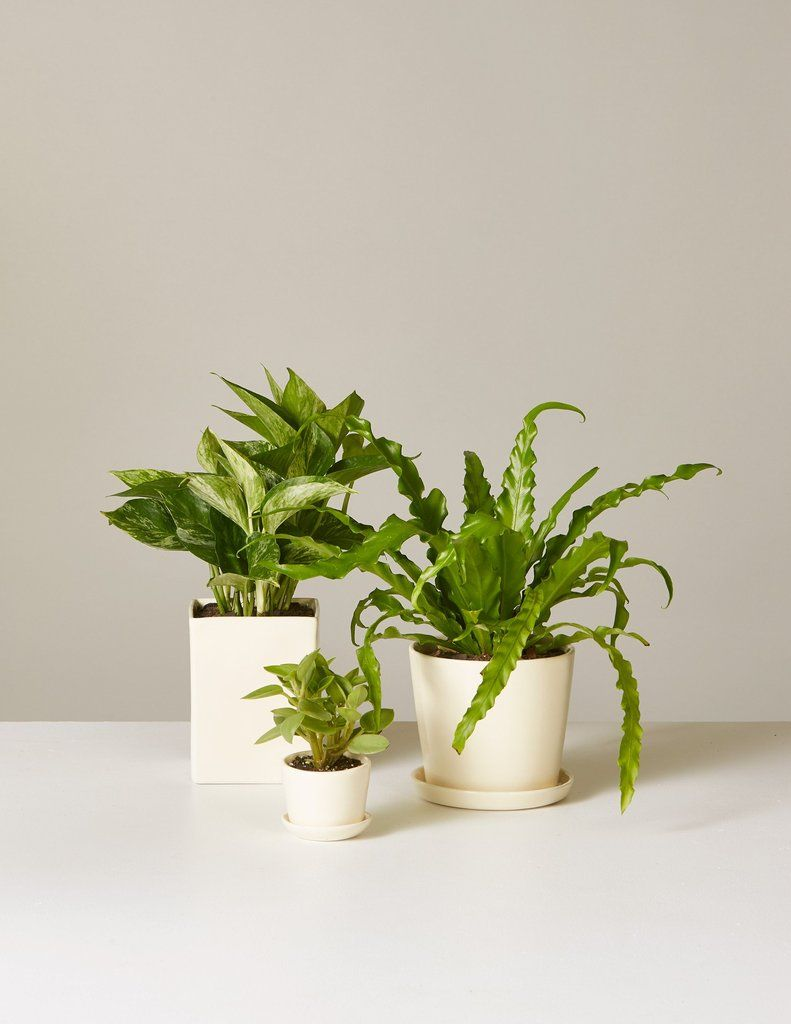 collection  minimalist apps bedroom plants feng shui