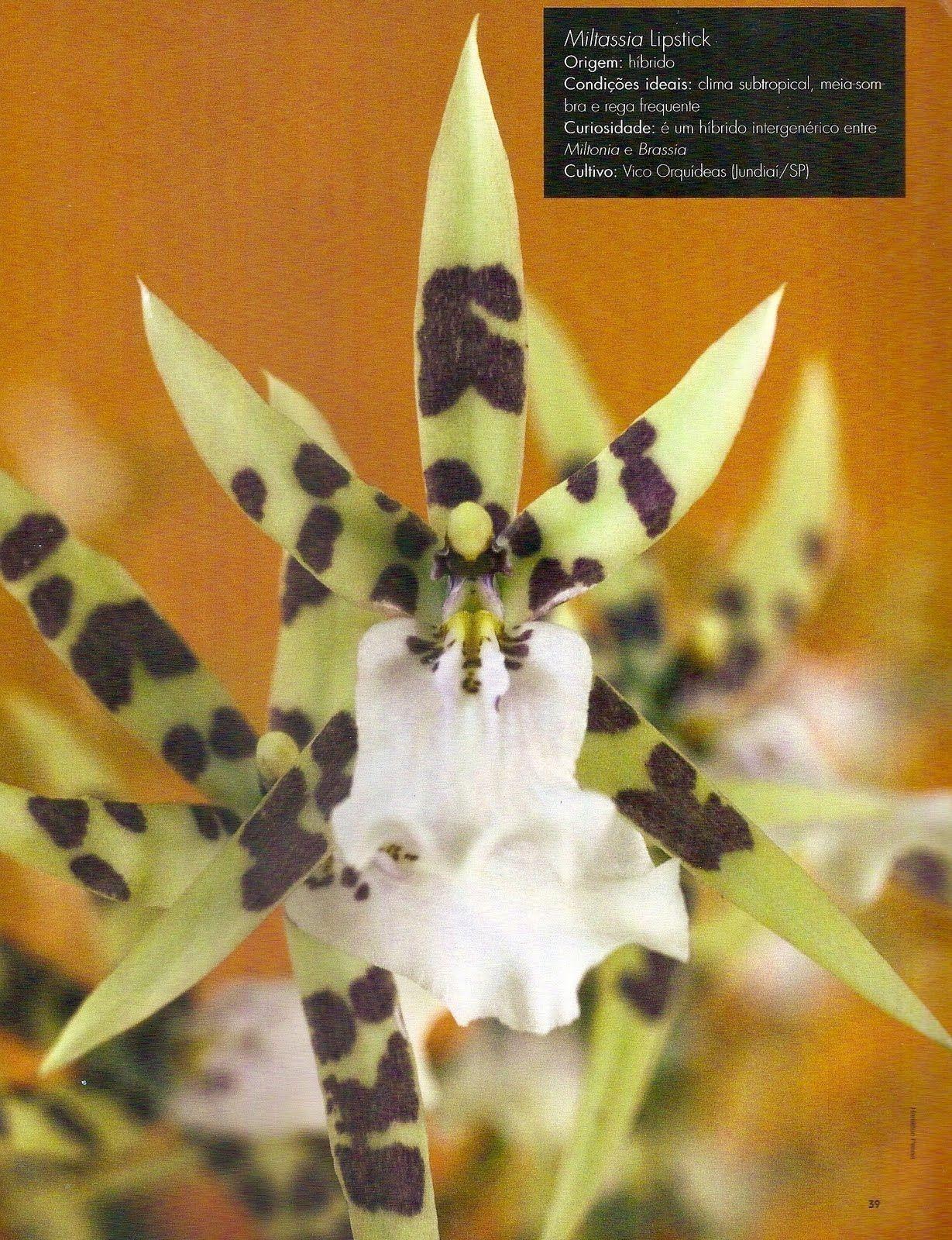 Paixão por orquídeas - Meu orquidário: Sobre as Orquídeas...