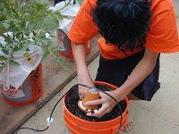 Global Buckets: Olla Irrigation