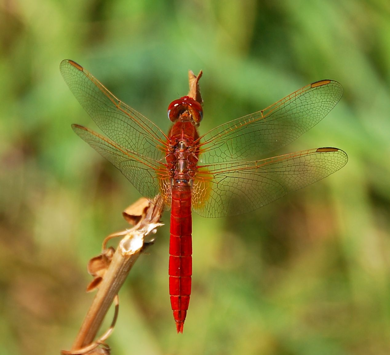 Pin by 楊乃耀 on 蜻蜓