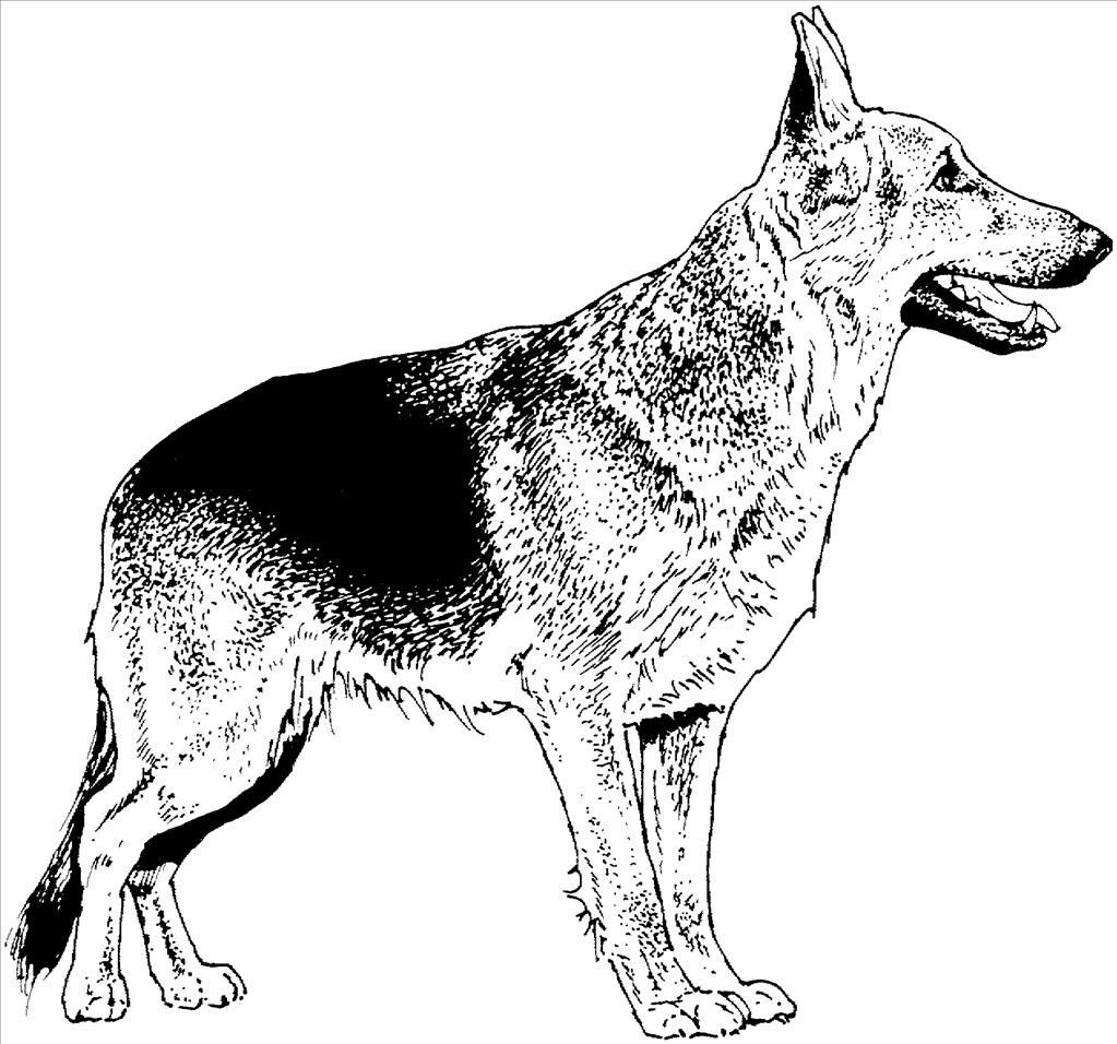 German Shepherd Dog Coloring Pages To Print Dog Coloring Page German Shepherd Colors Puppy Coloring Pages