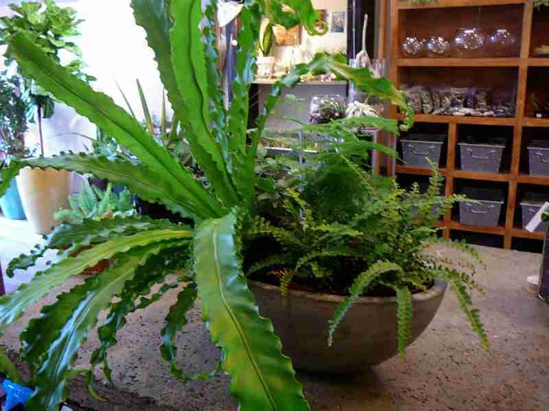 Best Houseplants That Purify the Air  You can get your 3-in-1 Air Cleaning System here: http://amzn.to/1ewoZ9h