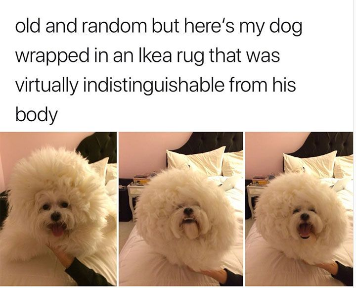 36 Funny Animals Pictures That Will Make You Laugh No Matter