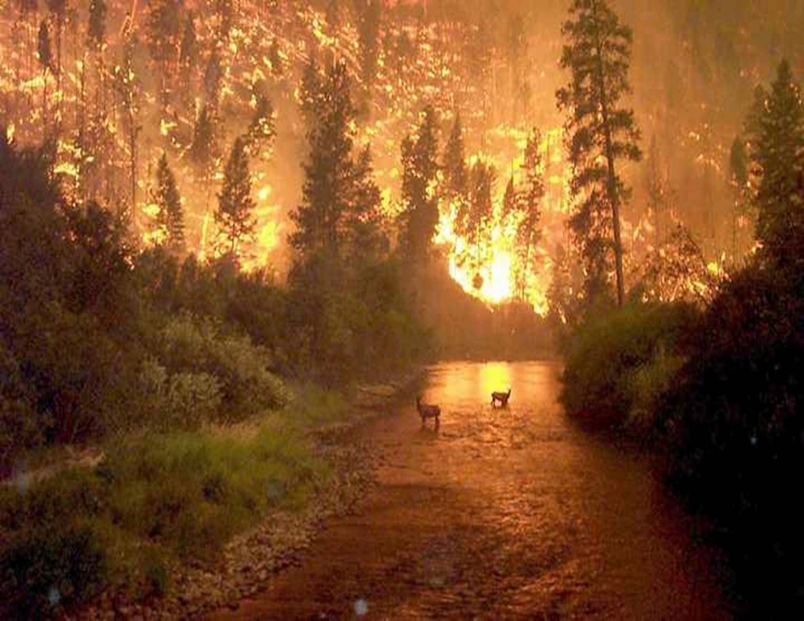 Catastrophic wildfires (With images) Nature