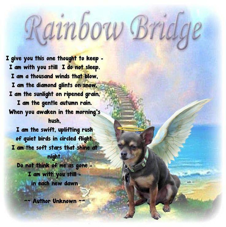 photo relating to Rainbow Bridge Poem Printable identify Rainbow Bridge Poem Printable 2: PJ Charlie Murphy \u003c3