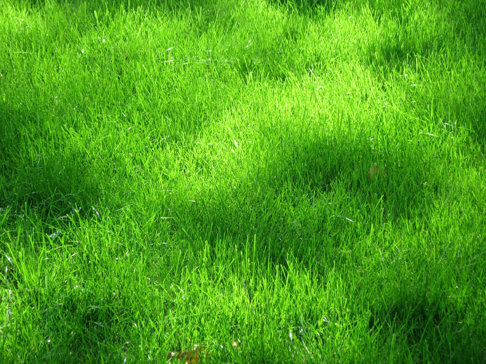 Download texture green grass texture texture download for Best grass for landscaping
