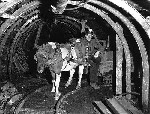 efab62c7442e2db7ba757ba78943d122 pit ponies were horses used in coal mines in the mid 18th to mid underground mining hard hats at sewacar.co