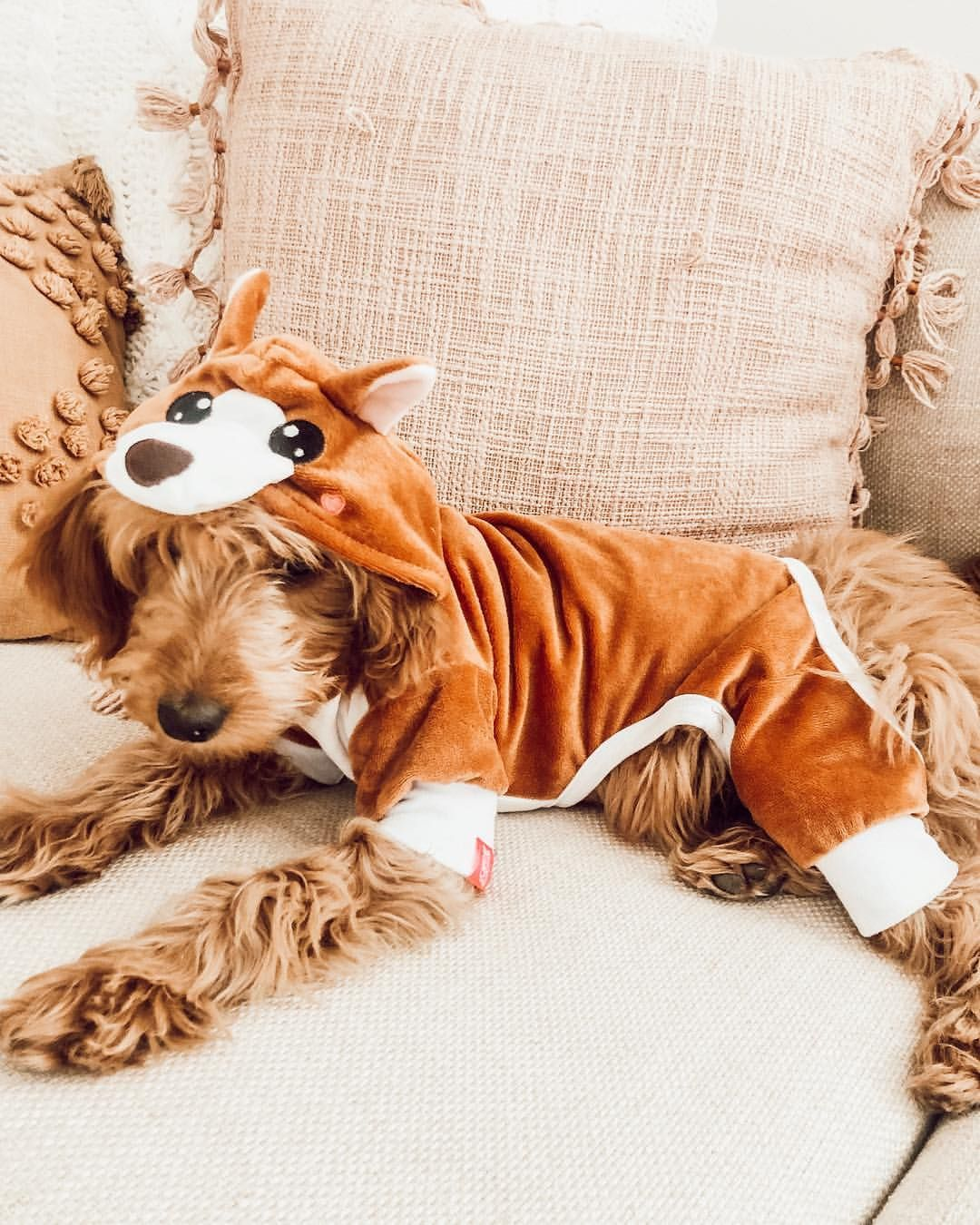 Wearing My New Outfit Thanks Laurdiy Cute Animals Cute Dogs Puppy Kisses