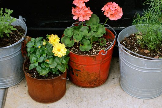 flowers potted in vintage buckets