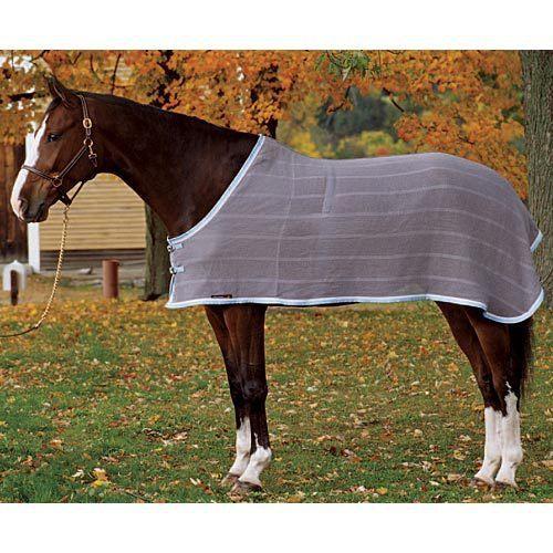 English Horse Tack