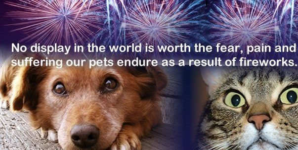 Petition The Prime Minister Ban The Use Of Fireworks By Private