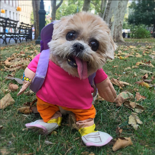 Cute Dogs In Halloween Costumes Dog Costumes Funny Funny Animal
