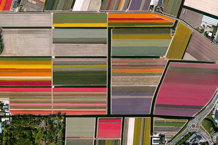 Netherlands Tulip Fields The Real Unrealness of