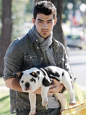 English Bulldog Puppies For Sale Suburbanbullies Com Celebrity