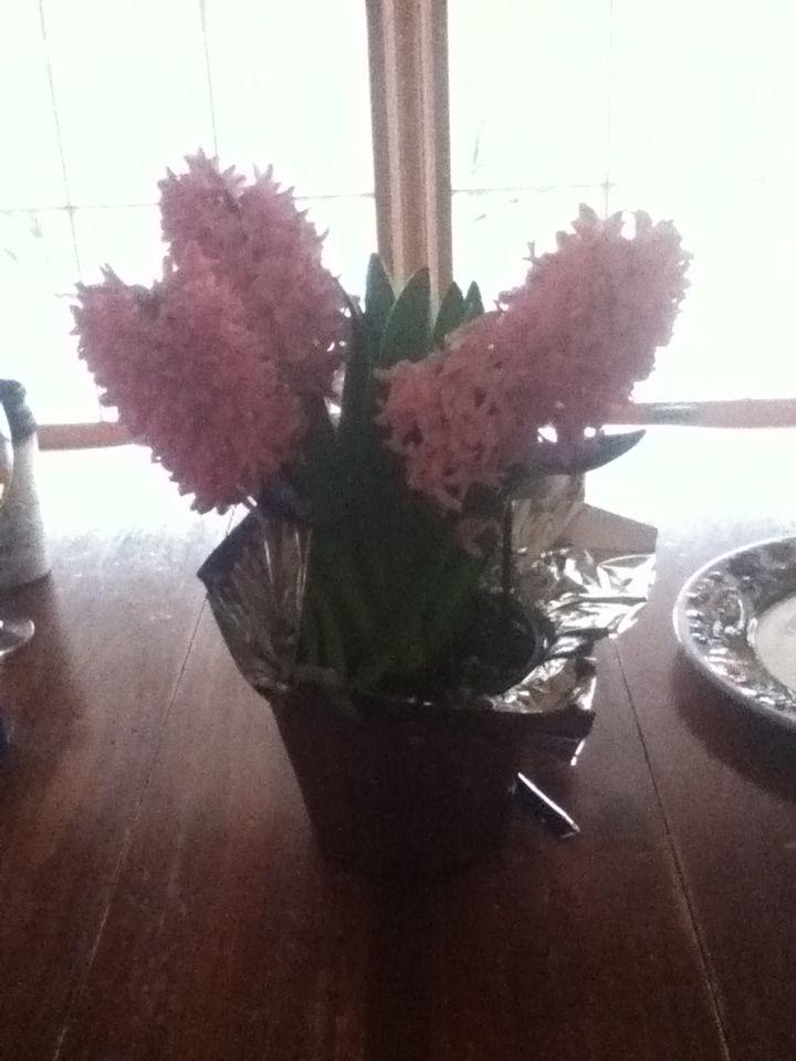 Hyacinth=beauty